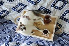 Frukost i säng Tillbringare och en kopp kaffe på ett handgjort trämagasin Vit katt på blå linne Arkivbild