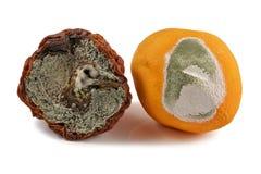 Frukt, äpple och apelsin som är mögliga, på en vit bakgrund Royaltyfri Foto