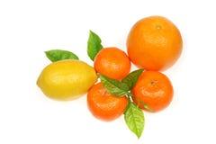 frukt Royaltyfri Fotografi