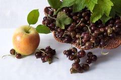 Frukt-bär stilleben Royaltyfri Bild
