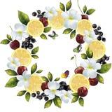 Frukt- bärblandning i en cirkel Royaltyfri Fotografi