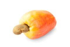 Frukt för brasilianCaju kasju Royaltyfri Foto