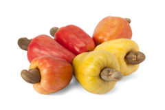 Frukt för brasilianCaju kasju Royaltyfria Foton