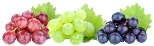 Frukt för frukter för druva för druvor som i rad röd isoleras på vit royaltyfri foto