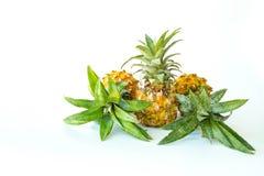 Frukt för Phu laeananas Royaltyfri Fotografi