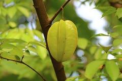 Frukt för stjärnaäpple Arkivfoto