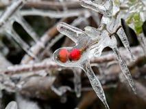 Frukt i is Royaltyfri Fotografi
