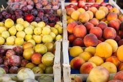 Frukt i askar Arkivbild