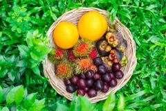 Frukt i korg Fotografering för Bildbyråer