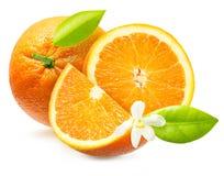 frukt isolerad orange royaltyfri fotografi