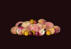 Frukt med en kärnapersikor, plommoner och aprikors på en svart bakgrund Royaltyfri Foto