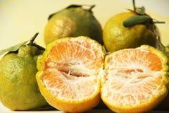 Frukt Minas Gerais Brazil för bakgrund för organisk familj för tangerin åkerbruk vit royaltyfri bild