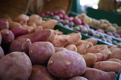 Frukt och grönsak för Tampa Bay bondemarknad fotografering för bildbyråer