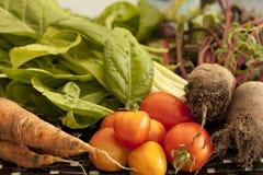 Frukt och ny grönsakträdgård Arkivfoton