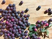 Frukt och sidor av Amelanchierovalis arkivfoton