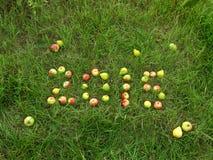 Frukt på gräset Arkivfoto