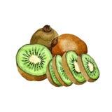 Frukt selvaggio del kiwi esotico in uno stile dell'acquerello isolato Fotografia Stock