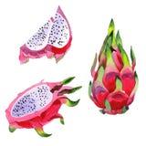Frukt selvaggio di pitaya esotico in uno stile dell'acquerello isolato Fotografia Stock Libera da Diritti