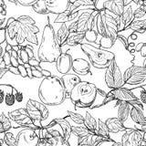 Frukt skissar Stock Illustrationer