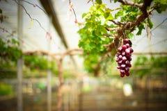 frukt thailand Arkivfoto