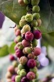 frukt tree3 Fotografering för Bildbyråer