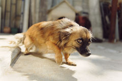 Fruktansvärd hund Royaltyfria Bilder