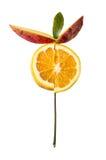 Fruktblomma på en vit bakgrund royaltyfri fotografi