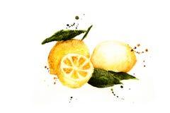 Fruktcitron-vattenfärg målning Arkivfoto