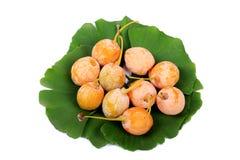 Frukten och sidorna av ginkgobilobaen royaltyfri fotografi