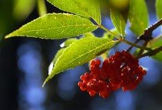 frukter Fotografering för Bildbyråer