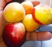 Frukter aprikos, jujube, persika, arkivbild