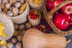 Frukter av hösten royaltyfri fotografi