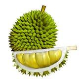 frukter för Durian 3D vektor illustrationer