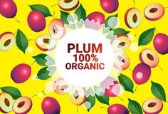 Frukter för färgrikt för cirkel för plommonfrukt mönstrar bantar organiska over nya utrymme för kopia sund livsstil för bakgrund  royaltyfri illustrationer