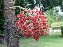 Frukter gömma i handflatan. Royaltyfria Foton