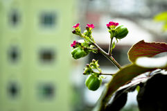 Frukter i en djungel Royaltyfri Foto