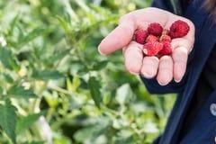 Frukter i en hand Arkivbilder