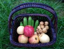 Frukter i korg i trädgård Arkivfoton