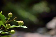 Frukter i skognatur på grön bakgrund royaltyfri foto
