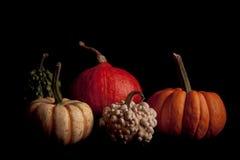 frukter isolerade mogen pumpa Arkivbild