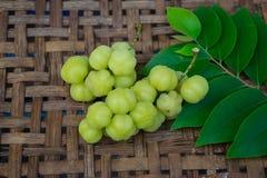 Frukter med det höga innehållet för vitamin C Royaltyfri Bild