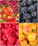 Frukter och bär collage Royaltyfri Bild