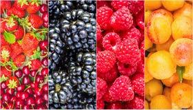 Frukter och bär collage Arkivfoto