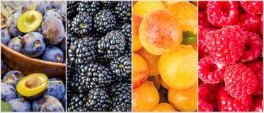 Frukter och bär collage Arkivbilder