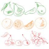 Frukter och bär som målas med kulöra linjer stock illustrationer