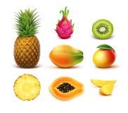 frukter ställde in tropiskt stock illustrationer