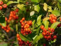 Frukterna av naturen Royaltyfri Bild