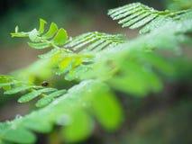 Fruktflugan säger Hello Arkivfoto