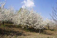 fruktfruktträdgård royaltyfri bild