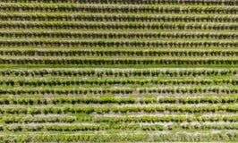 Fruktfruktträdgård, polska fruktträdgårdar, flygbild Arkivfoton